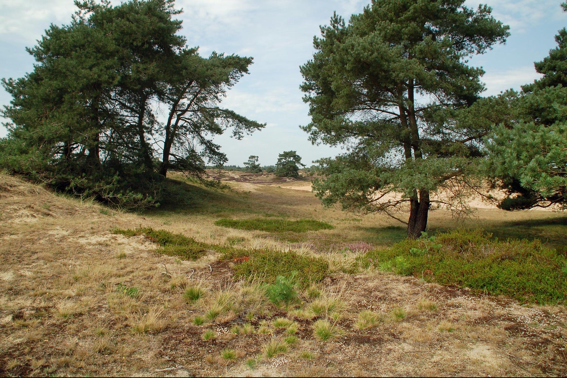 Nationaal Park het Drents Friese Wold